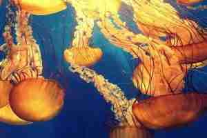 Jellyfish in Thailand – safe sea lotion