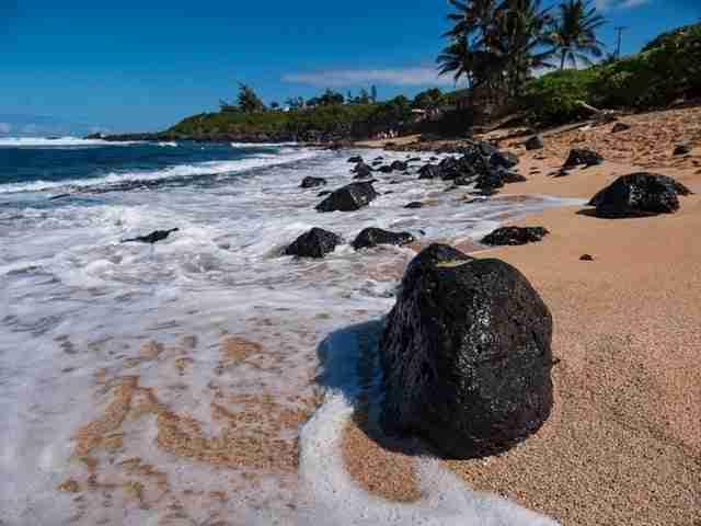 Jellyfish in Hawaii
