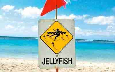 5.7.20 – Jellyfish in Florida